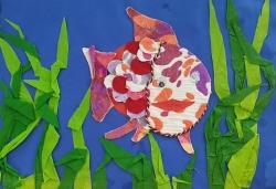 I pesci del laghetto d'Arquà